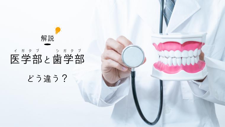 医学部と歯学部の違い